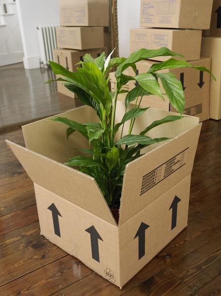 Moving with Plants