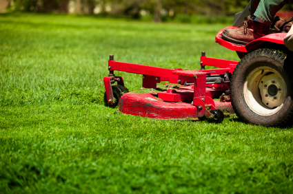 The Ultimate Guide to Lawns