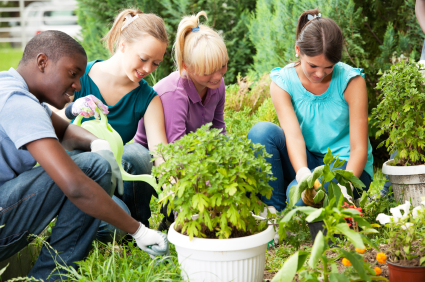 Tending your Garden after Hail Storm