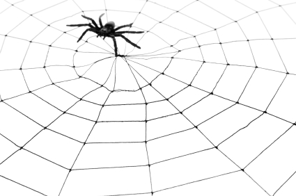 How to Kill Spiders Naturally Pest Control