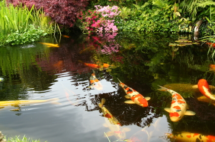 Types of plants for japanese garden landscapers for Japanese garden bushes