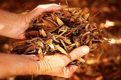How to Compost Fall Leaves