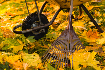 Why You Should Relax after Raking the Lawn and How to Do It
