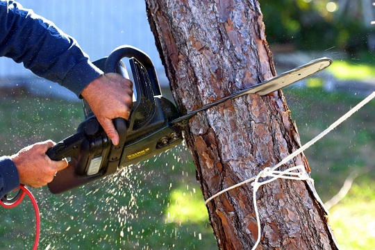Cutting A Tree : Do i need a license to cut down trees tree removal