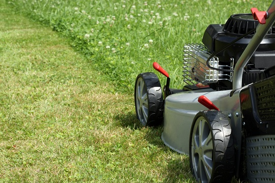 How often should lawn be mowed landscapers talk local for How often should you mow your lawn