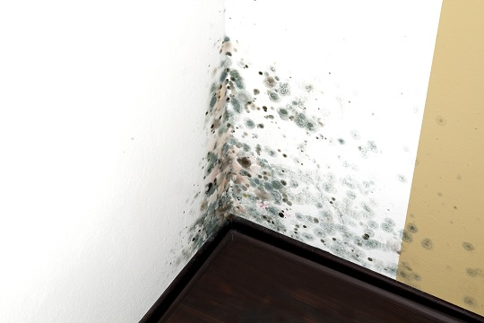 How to Get Rid of Mold in the House