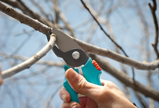 When Should I Prune My Trees?