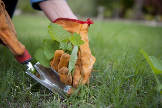 How to Remove Weeds from Backyard - Landscapers