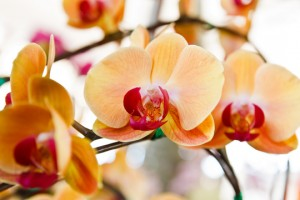 Common Exotic Flowers For A Garden - Florists