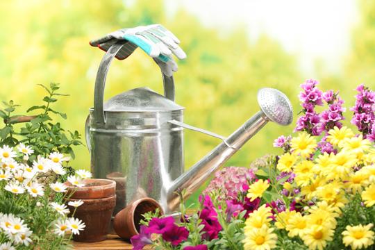 Common Exotic House Plants - Florists