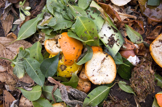 How To Compost Your Garbage