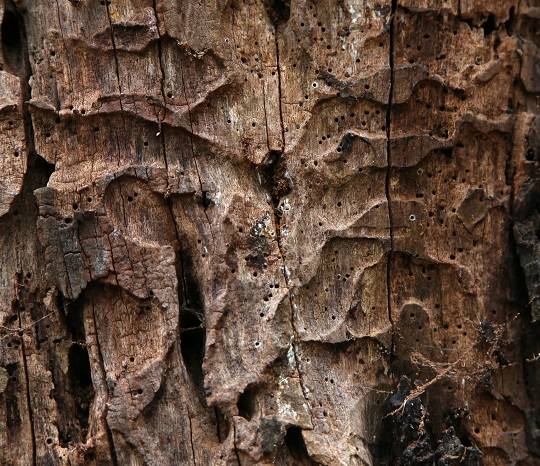 How to Detect Decay in Trees