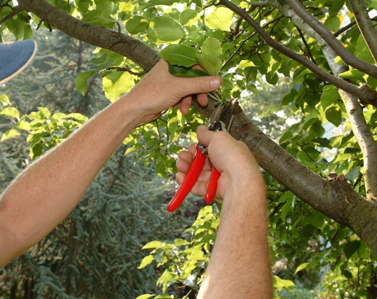 Tips for Training Young Trees