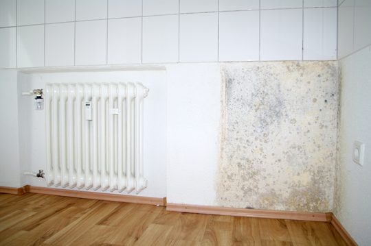 How to Remove Household Mold