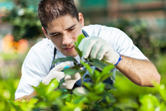 Can Gardeners Prune Trees?