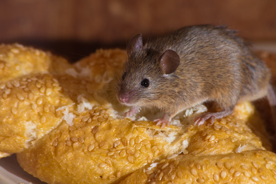 How To Care For Small Rodents - Veterinarians