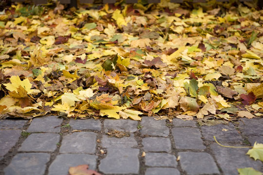 Fastest Ways To Clean Up Leaves - Landscapers