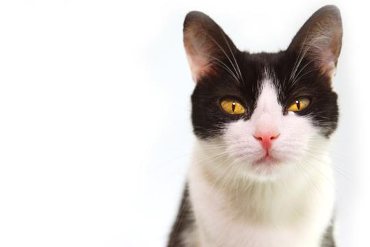 Hypo-Allergenic Cat Breeds