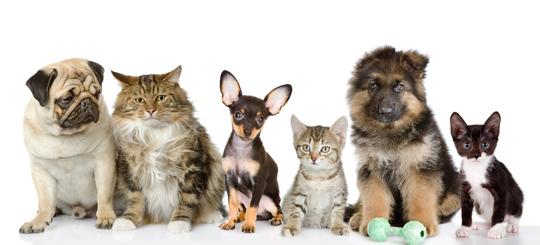 Hypo-Allergenic Pets