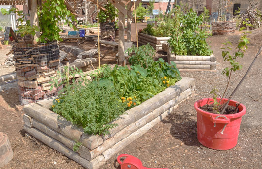 Why Use A Raised Garden?