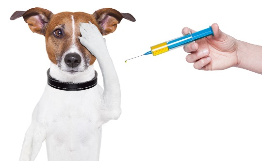 What Painkillers Can You Give Dogs