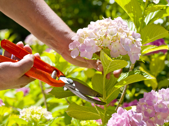 Image result for cutting flowers