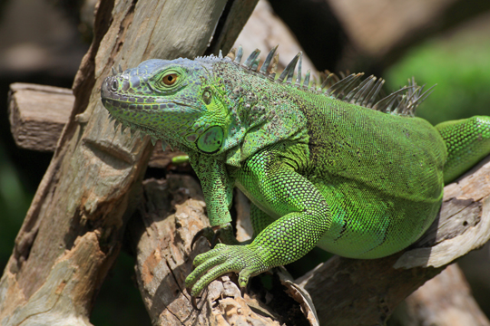 How to Care for Reptile Pets