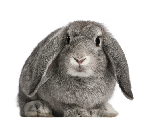 How to Pick Cages for Rabbits - Veterinarians