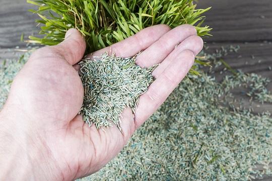 Schultz Plant Food